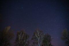 Ο γαλακτώδης τρόπος αυξάνεται πέρα από τα δέντρα πεύκων σε ένα πρώτο πλάνο Στοκ Εικόνες