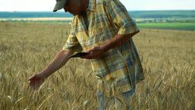 Ο γεωπόνος στις μελέτες τομέων η συγκομιδή σιταριού στον τομέα και τα αρχεία οι πληροφορίες για μια ταμπλέτα σε έναν ηλιόλουστο απόθεμα βίντεο