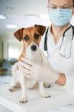 Κτηνίατρος με το σκυλί Στοκ εικόνες με δικαίωμα ελεύθερης χρήσης