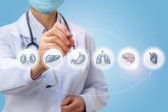 Ο γιατρός σύρει ένα διάγραμμα της μελέτης των υπομονετικών οργάνων ` s Στοκ φωτογραφία με δικαίωμα ελεύθερης χρήσης