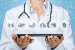 Ο γιατρός ` s παρουσιάζει στην ταμπλέτα εσωτερικά όργανα Στοκ Φωτογραφίες