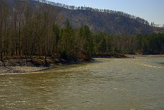 Ο γρήγορος ποταμός Katun φέρνει τα τυρκουάζ νερά του κατά μήκος του ποδιού των βουνών Altai Gorny Altai, Σιβηρία, Ρωσία o στοκ φωτογραφία