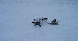 Ο γύρος με τους ταράνδους σε ένα έλκηθρο ένα σιβηρικό άτομο έχει tundra που καταπλήσσει την εναέρια άποψη του κηφήνα απόθεμα βίντεο