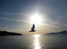 Ο γλάρος μπροστά από τον ήλιο Στοκ Εικόνες