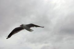 Ο γλάρος Στοκ φωτογραφία με δικαίωμα ελεύθερης χρήσης