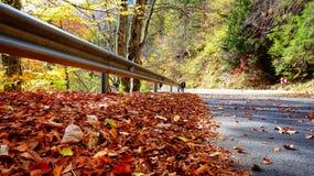 Ο δρόμος με το φθινόπωρο βγάζει φύλλα στοκ εικόνα