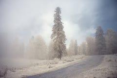 Ο δρόμος που οδηγεί σε ένα υπερφυσικό δάσος στην ομίχλη στοκ φωτογραφίες
