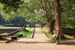 Ο δρόμος στο οροπέδιο στο πάρκο μεταξύ των πρώτων καλλιεργεί με τις πηγές στοκ φωτογραφία με δικαίωμα ελεύθερης χρήσης