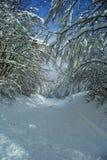 Ο δρόμος στο χιονώδες δάσος Στοκ φωτογραφία με δικαίωμα ελεύθερης χρήσης