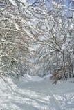 Ο δρόμος στο χιονώδες δάσος Στοκ Εικόνες