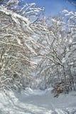 Ο δρόμος στο χιονώδες δάσος Στοκ φωτογραφίες με δικαίωμα ελεύθερης χρήσης