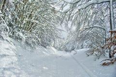 Ο δρόμος στο χιονώδες δάσος Στοκ Φωτογραφίες