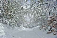 Ο δρόμος στο χιονώδες δάσος Στοκ εικόνα με δικαίωμα ελεύθερης χρήσης