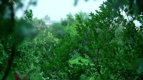 Ο δυνατός αέρας κυματίζει τα φύλλα και τα δέντρα απόθεμα βίντεο