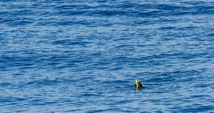 Ο δύτης με κολυμπά με αναπνευτήρα κατά τη διάρκεια της κολύμβησης στον ενεργού και ενδιαφέροντος νερού αθλητισμό επιφάνειας θάλασ στοκ εικόνες