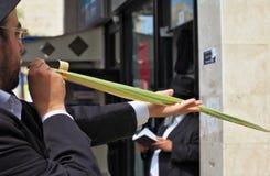 Ο Εβραίος επιλέγει το τελετουργικό φυτό Lula Στοκ φωτογραφία με δικαίωμα ελεύθερης χρήσης