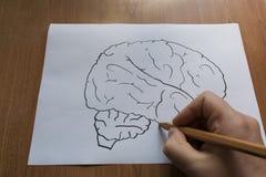 Ο εγκέφαλος επισύρεται την προσοχή σε χαρτί με ένα μολύβι Στοκ Φωτογραφία