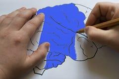 Ο εγκέφαλος επισύρεται την προσοχή σε χαρτί με ένα μολύβι Στοκ εικόνες με δικαίωμα ελεύθερης χρήσης