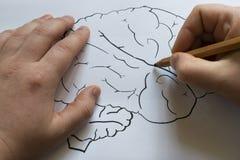 Ο εγκέφαλος επισύρεται την προσοχή σε χαρτί με ένα μολύβι Στοκ Φωτογραφίες
