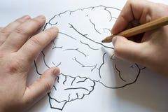 Ο εγκέφαλος επισύρεται την προσοχή σε χαρτί με ένα μολύβι Στοκ εικόνα με δικαίωμα ελεύθερης χρήσης