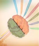 Ο εγκέφαλος Στοκ φωτογραφίες με δικαίωμα ελεύθερης χρήσης
