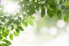 ο ειρηνικός ουρανός ομορφιάς με πράσινο βγάζει φύλλα Στοκ Φωτογραφίες