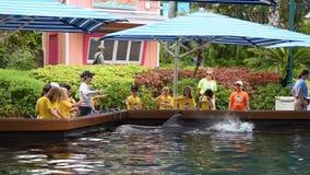 Ο εκπαιδευτής καθοδηγεί τα παιδιά για να κινήσει τα χέρια τους ενώ τα δελφίνια καταβρέχουν σε Seaworld φιλμ μικρού μήκους