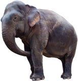 ο ελέφαντας ανασκόπησης &a στοκ εικόνες