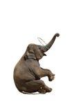 Ο ελέφαντας απομόνωσε την άσπρη ανασκόπηση. Στοκ φωτογραφίες με δικαίωμα ελεύθερης χρήσης