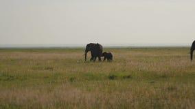 Ο ελέφαντας με το μωρό στην πεδιάδα και τον μπαμπά έρχεται σε τους απόθεμα βίντεο