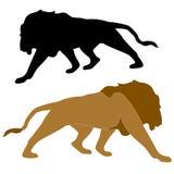 Ο ενήλικος αρσενικός Μαύρος χρώματος λιονταριών ρεαλιστικός Στοκ Φωτογραφίες