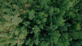 Ο εναέριος πυροβολισμός κηφήνων πέρα από το δασικό κηφήνα πετά αργά προς τα εμπρός απόθεμα βίντεο