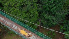 Ο εναέριος πυροβολισμός μιας νέας γυναίκας βάζει σε μια γέφυρα αναστολής πέρα από τις ζούγκλες Ταξίδι στην έννοια της Νοτιοανατολ απόθεμα βίντεο