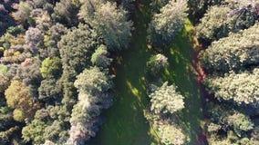 Ο εναέριος πυροβολισμός, που πετά πέρα από το γιγαντιαίο sequoia δάσος, με τα πανέμορφα πράσινα ξύλα πίσω από το, ανεβαίνοντας, μ απόθεμα βίντεο