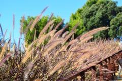 Ο ενδιαφέρων Μπους με τα ζωηρόχρωμα λωρίδες αυξάνεται στο πάρκο στοκ φωτογραφίες με δικαίωμα ελεύθερης χρήσης