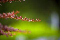 Ο ενιαίος κλάδος λουλουδιών Στοκ Εικόνα