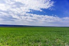 Ο επίπεδος τομέας, πράσινος σίτος μεγάλωσε κάτω από το μπλε ουρανό Το καλλιεργήσιμο τοπικό LAN Στοκ Εικόνες