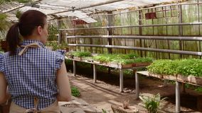 Ο επαγγελματικός κηπουρός γυναικών στην ποδιά εργάζεται σε ένα θερμοκήπιο φιλμ μικρού μήκους