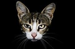Ο επικεφαλής μιας γάτας με μια ατέλεια ματιών στο Μαύρο απομόνωσε το υπόβαθρο Στοκ εικόνες με δικαίωμα ελεύθερης χρήσης