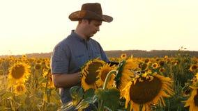 Ο επιχειρηματίας με την ταμπλέτα εξετάζει τον τομέα του με τους ηλίανθους περίπατοι αγροτών σε έναν ανθίζοντας τομέα άτομο γεωπόν απόθεμα βίντεο
