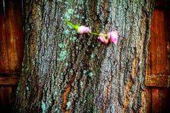 Ο 0 εραστής ρίχνει τα τριαντάφυλλα στο δέντρο στοκ εικόνα