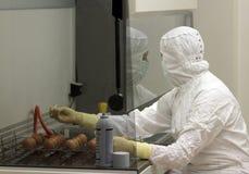 Ο εργαζόμενος εργαστηρίων εργάζεται με τα αυγά στο εργαστήριο, εργαστήριο, 10 2017, Πολωνία στοκ φωτογραφία
