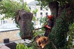 Ο εργαζόμενος κόβει τους κλάδους δέντρων Στοκ Φωτογραφίες