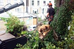 Ο εργαζόμενος κόβει τους κλάδους δέντρων Στοκ Εικόνες