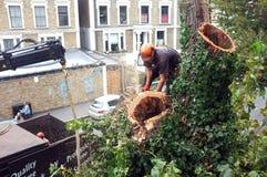 Ο εργαζόμενος κόβει τους κλάδους δέντρων Στοκ εικόνα με δικαίωμα ελεύθερης χρήσης