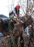 Ο εργαζόμενος κόβει τους κλάδους δέντρων Στοκ Φωτογραφία