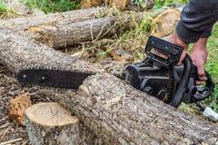 Ο εργαζόμενος πριονίζει ένα ξύλινο κούτσουρο με το ηλεκτρικό πριόνι αλυσίδων στοκ εικόνες