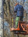Ο εργαζόμενος στα σκαλοπάτια αφαιρεί τους κλαδίσκους και τα ragged καλώδια Στοκ Εικόνες