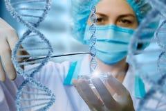 Ο ερευνητής κρατά το δείγμα DNA στοκ φωτογραφία