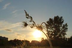 Ο ερχόμενος ηλιακός μικρός λαμπτήρας Στοκ Εικόνα